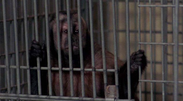 Monkey shines © Park Circus