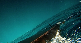 Purple Sea © VdR 2020